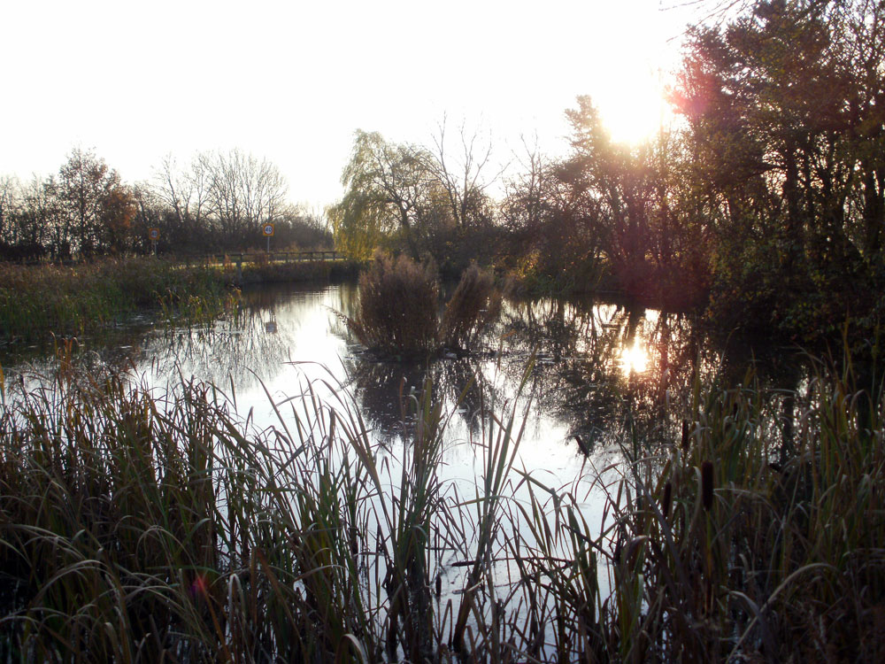 Seamer Pond