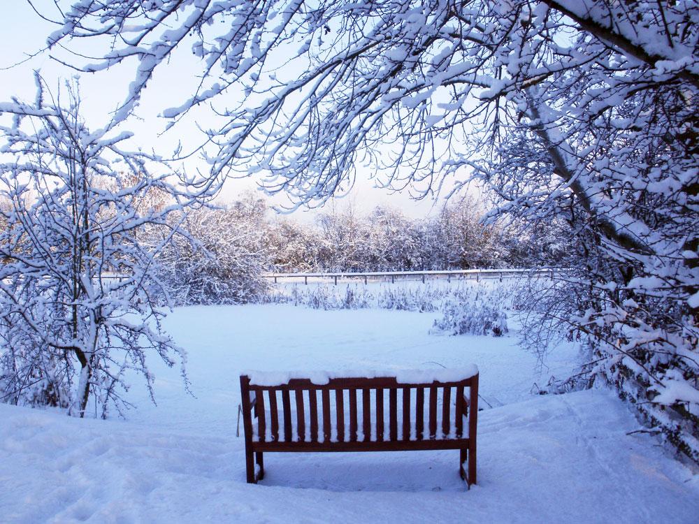 Frozen pond in Seamer