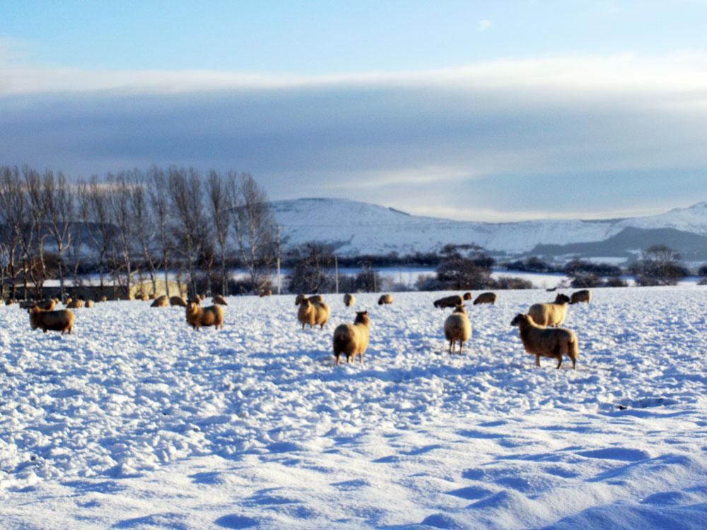 Rural Views in Seamer