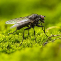 Plagued by flys every summer? Sign the petition calling for action